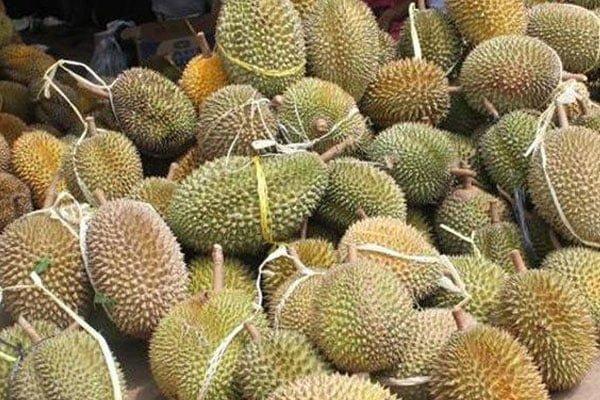 Gempar !!! Bila durian jadi pembunuh…