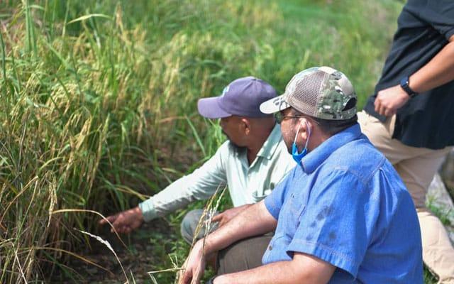 Kaji semula kadar potongan pemutuan padi yang tinggi – Dr Mujahid
