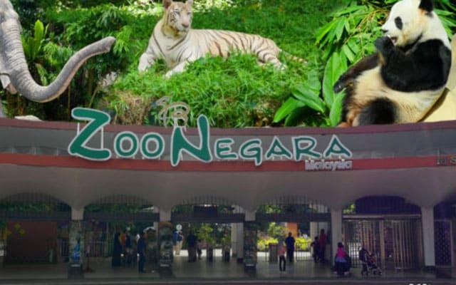 Haiwan zoo masih sihat, bergantung tabung kecemasan untuk terus bertahan