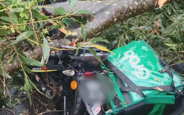 """Tragis !!! Ribut petir buatkan pokok  hempap """"rider"""" grab food hingga maut"""