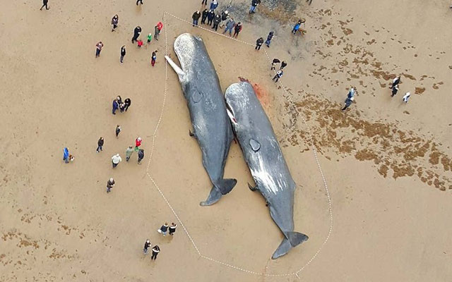 Muntah ikan paus seberat 127 kg jadikan nelayan ini jutawan