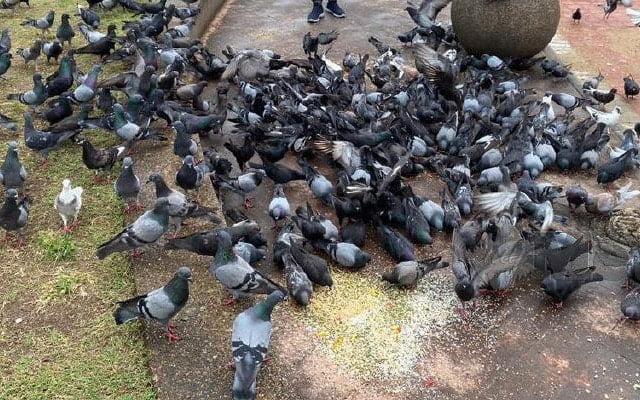 Gara-gara beri burung makan, warga emas kena denda RM17,000