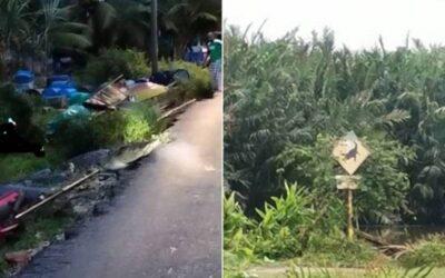 Buaya masuk kampung di Kuala Kurau, penduduk gempar