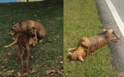 Gara-gara tindakan conteng cat pada badan, anjing disangka harimau